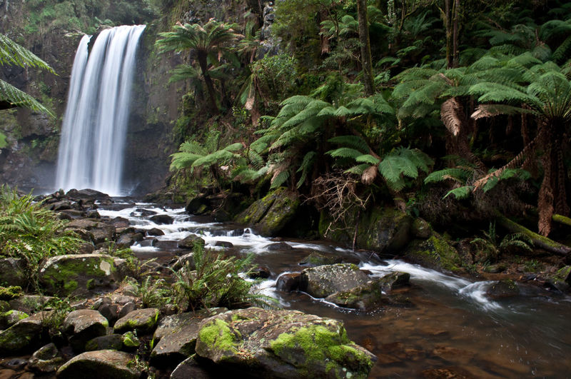 The Otways National Park rainforest The Otways Green Color Ferns Tree Fern River Rain Forest Plants Rain Forest Australia Water Waterfall Tree Power In Nature Motion Forest Long Exposure Spraying River Splashing Falling Water Flowing Moss Rapid Running Water Stream Stream - Flowing Water Flowing Water