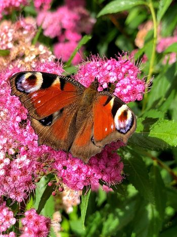 Wow Flower Animal Animal Themes Insect Beauty In Nature Flowering Plant Plant No People Close-up Fragility Animals In The Wild Animal Wing Butterfly - Insect Animal Wildlife Invertebrate Nature Growth One Animal Pink Color Vulnerability