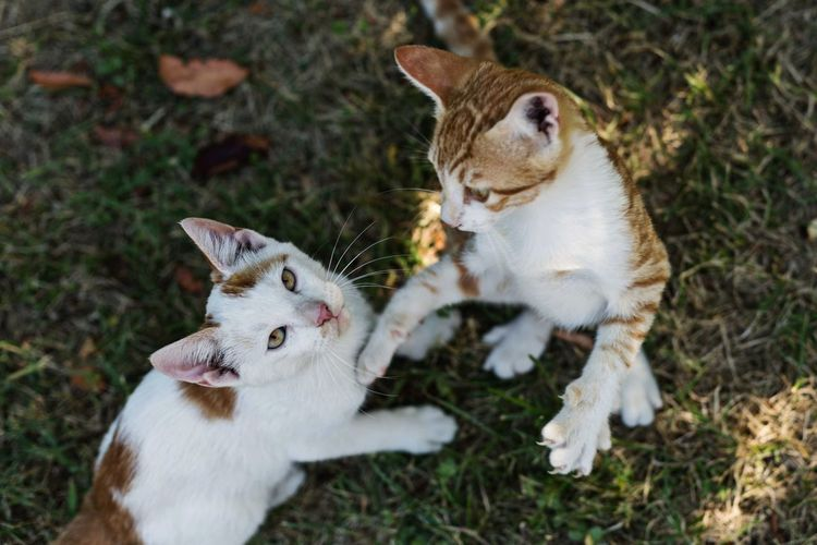 Catfight Catfight Movement Photography Fight Fighter Cat Lovers Catoftheday Cats 🐱 Twins Twin Brothers Pets Feline Portrait Domestic Cat Cute Protruding Grass Close-up Whisker Kitten Cat Stray Animal Yellow Eyes Tabby Ginger Cat Lion Cub Carnivora