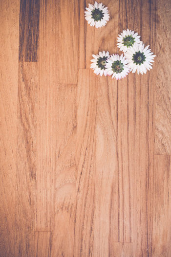Close-up of flowers on wooden wall