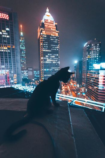 Building Exterior Architecture Built Structure City Night Skyscraper One Animal Illuminated Mammal Animal Themes Domestic Animals Dog Pets Sky Outdoors Cityscape Real People Urban Skyline