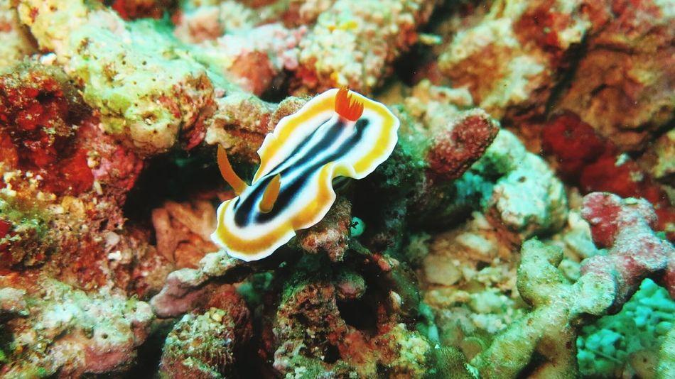 Sea slug Underwater Photography Cressi