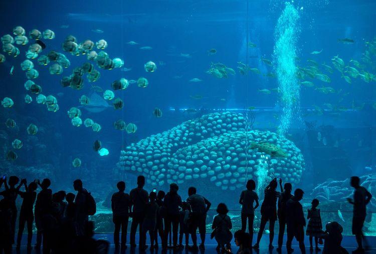 People Looking At Fishes In Aquarium