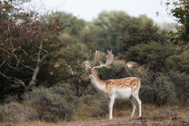 Stag On The Lookout Animal Wildlife Animal Themes Animal Animals In The Wild Mammal Deer Plant Beauty In Nature