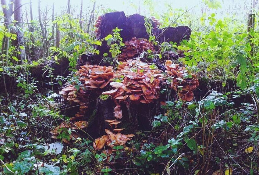 Tree fungi