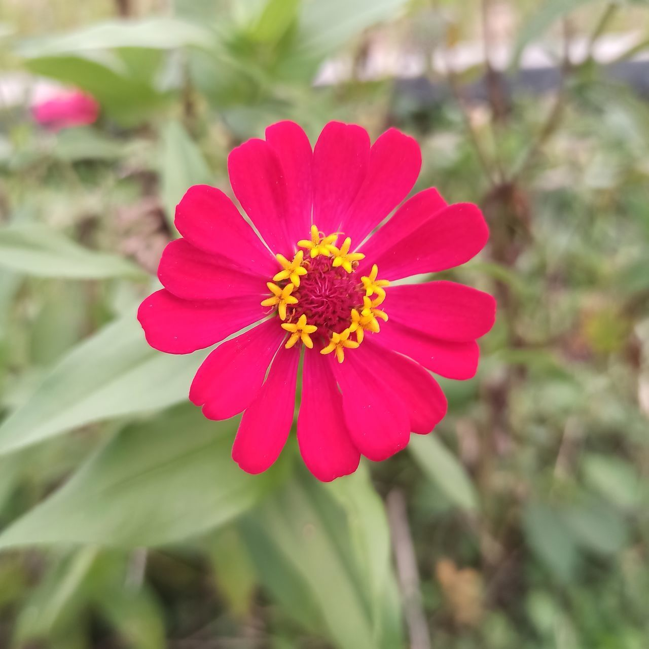 CLOSE-UP OF PINK AND RED FLOWER