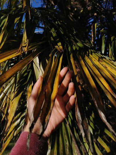 Cropped image of hand holding coconut palm tree