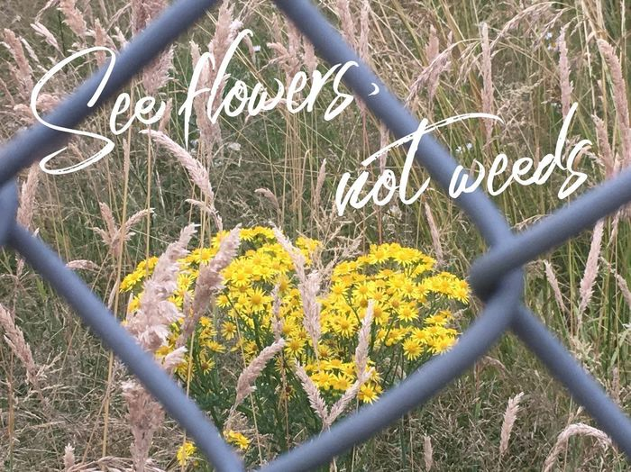 Look On The Bright Side Positivity Monday Motivation See Flowers Not Weeds See Flowers Communication Western Script Text Flower Flowering Plant Plant Day Growth Fence Nature No People Barrier Boundary Metal Chainlink Fence Beauty In Nature Close-up Security Protection Yellow