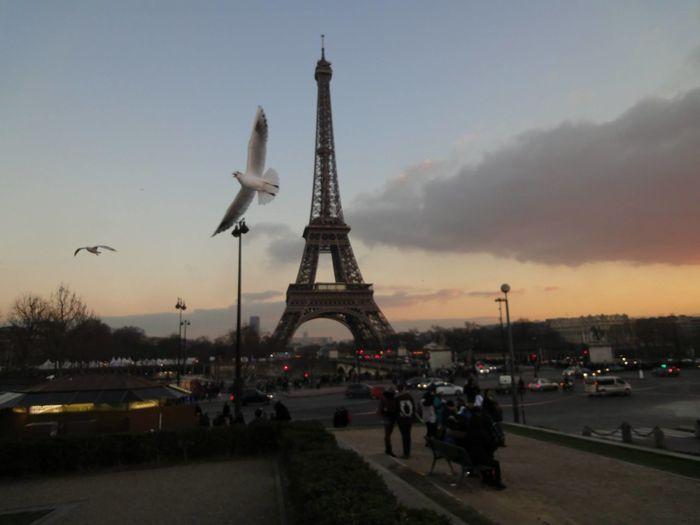Tour Eiffel Paris France Capodanno2015 HH88wlf City Old Town