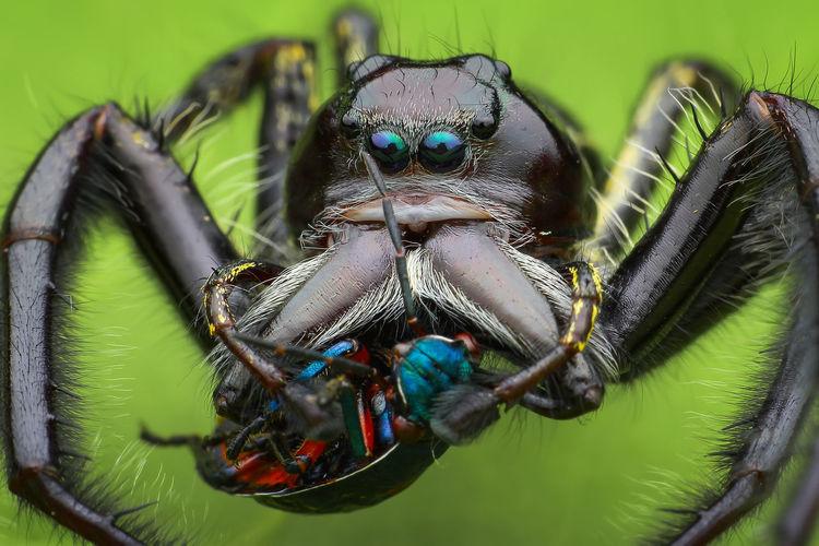 Macro shot of insect