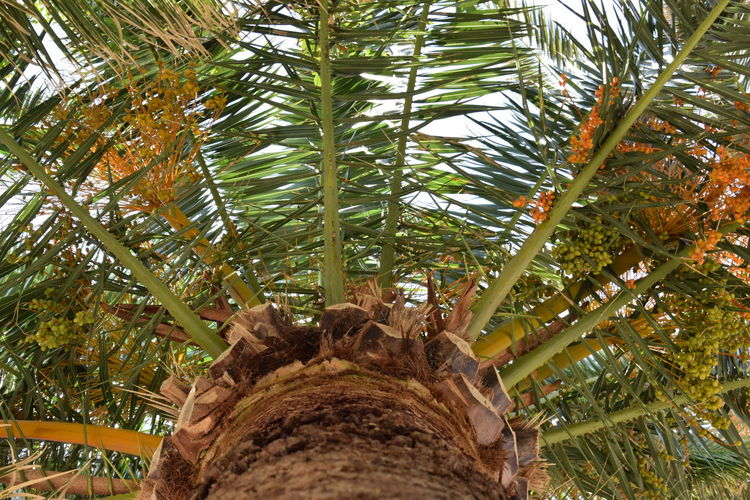 Beauty In Nature Branch Close-up Day Directly Below Forest Green Color Growth Land Leaf Low Angle View Nature No People Outdoors Palm Leaf Palm Tree Plant Plant Part Tree Tree Trunk Tropical Climate Trunk
