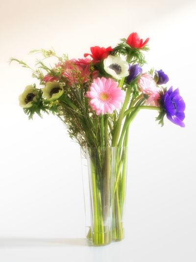 Beauty In Nature Bouquet Day Flower Flower Arrangement Flower Head Freshness Nature Studio Shot Vase White Background Soft Focus