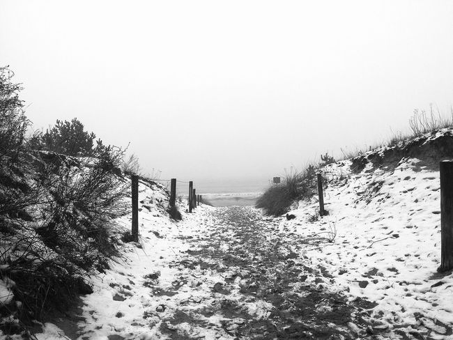 Very misty day at the beach. Monochrome Don Filter Being A Beach Bum Hugging A Tree