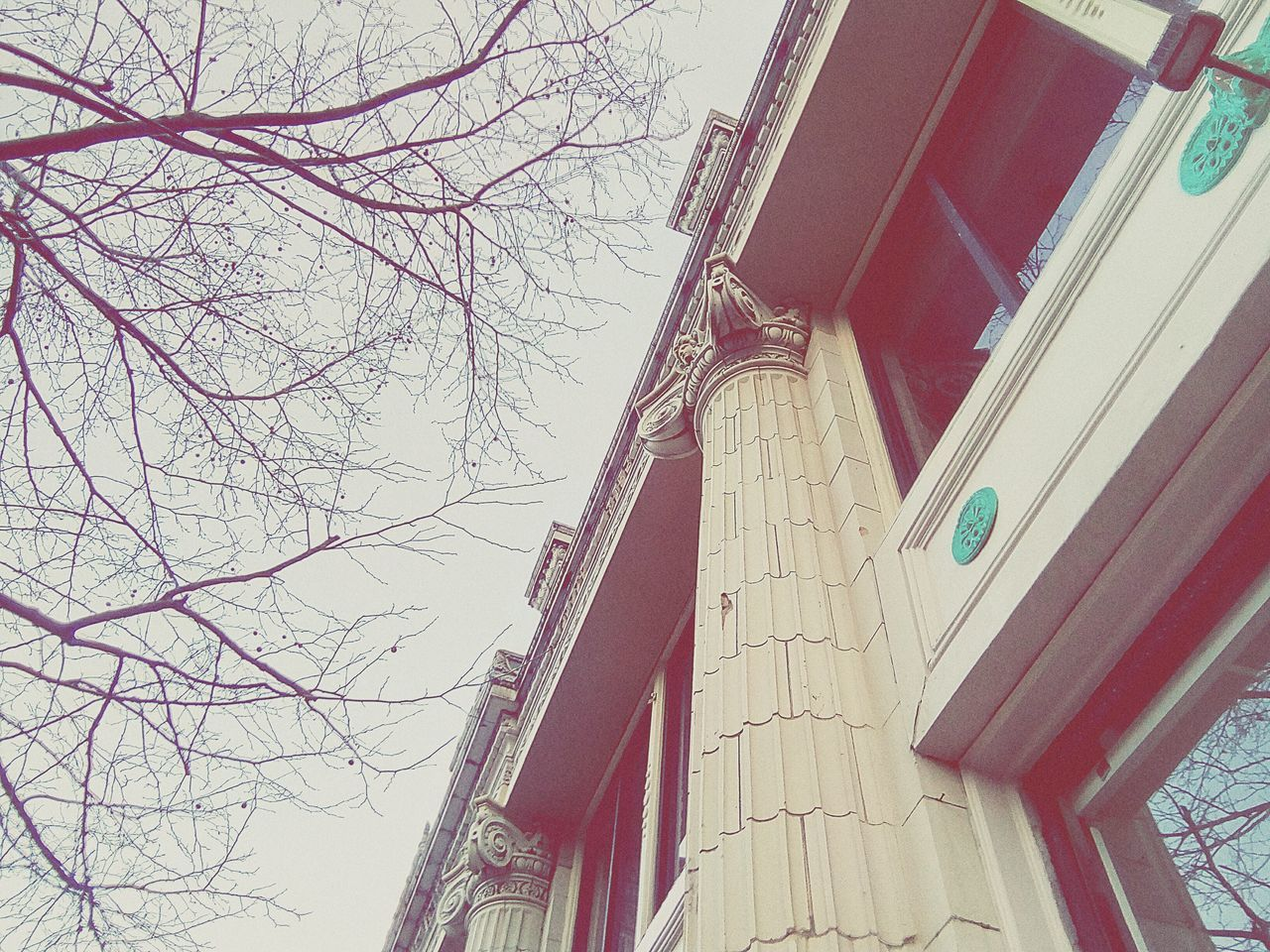 architecture, built structure, building exterior, low angle view, bare tree, no people, tree, outdoors, day, branch, sky