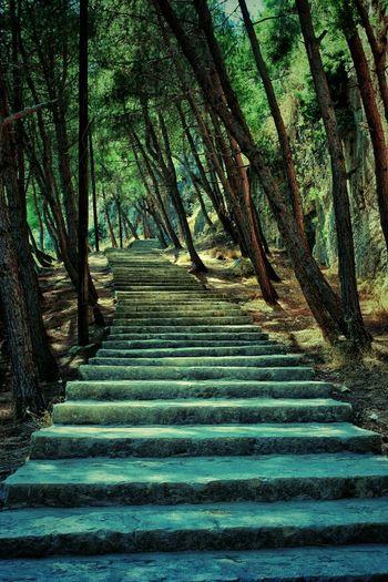 Trees Stairs Castle Syria  Latakia  Salah Aldin