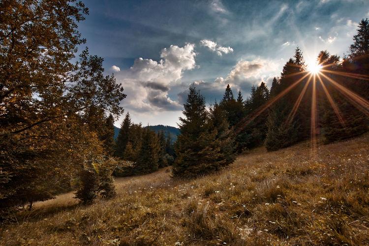Tree Sunset Rural Scene Sunlight Sun Sky Landscape Cloud - Sky Tree Area Sunbeam Majestic Non-urban Scene Dramatic Sky Sky Only Rays Long Shadow - Shadow Shining Growing Idyllic