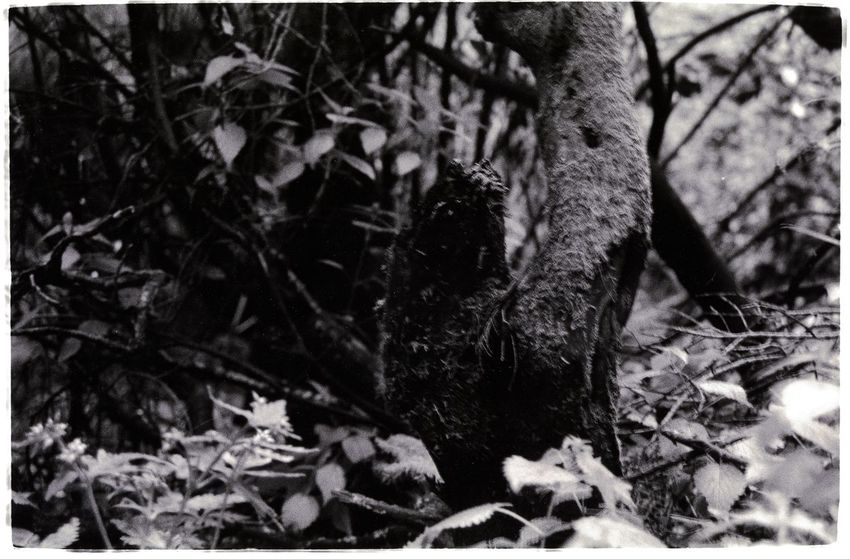 Forest Wonderwood Black And White Blackandwhite Photography Deepforest Forest Miracle Of Nature Rainforest Tweda