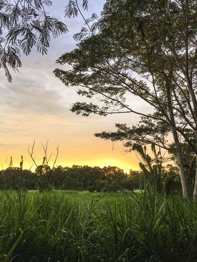 The Great Outdoors - 2016 EyeEm Awards Landscape Wild Singapore Wilderness Sunrise Sunset Sunshine