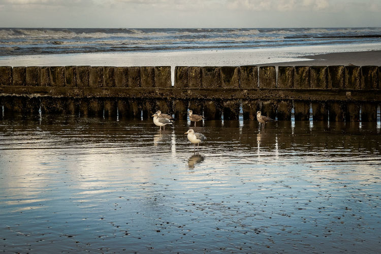 Seagulls at the