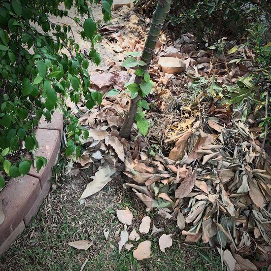 ใบไม้ Leaf Leaves Nature No People Plant Growth Green Color Outdoors Day