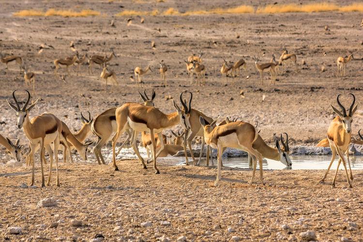 Gazelles on field in forest