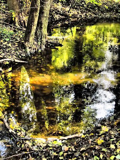 Day Frankfurt Frankfurt Am Main Nature Outdoors Stadtwald  Wald Waldspaziergang Water Reflections Wood
