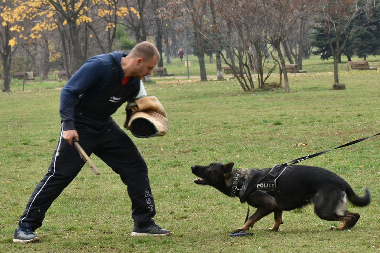 Police Dog Training Police Dog Trainer Animal Themes Black Labrador Day Dog Dog Attack Dog Trainer Dog Training Domestic Animals Full Length Grass Mammal Nature One Animal One Person Outdoors People Pets Police Real People Stories From The City