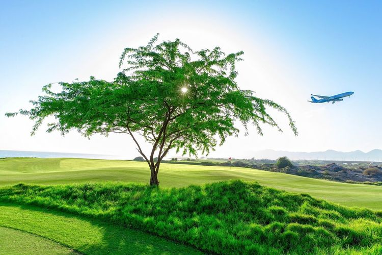 Grass Tree Nature Golf Course Beauty In Nature Landscape Clear Sky Scenics Tranquil Scene Golf Tranquility Idyllic Sky No People Outdoors Green - Golf Course Sea Day Early Morning Light Oman_photography OmanAir Oman_photo Oman_traveller Visit Oman Airbus A330