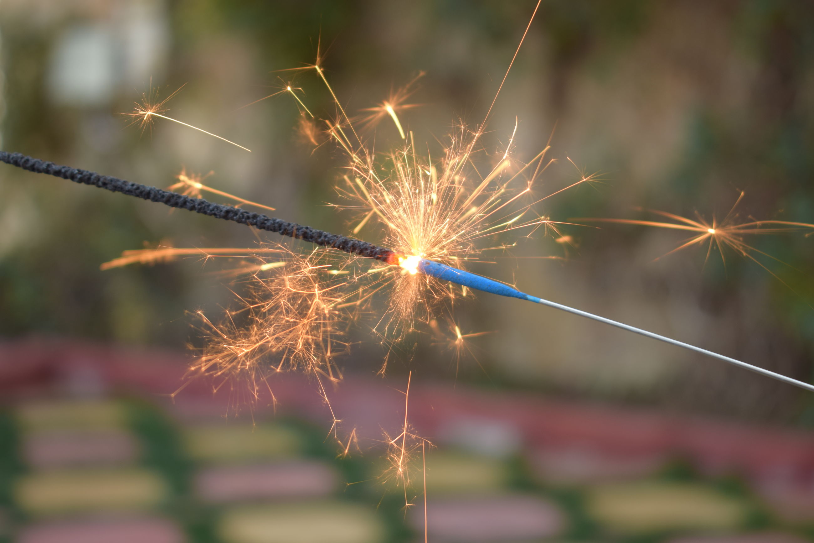 firework - man made object, celebration, focus on foreground, outdoors, no people, firework display, sparkler, plant, close-up, nature, day, sky