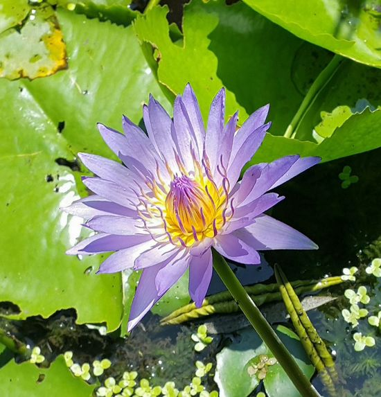Flower Collection Eye Em Nature Lover Beauty In Nature Water Lily Lotus