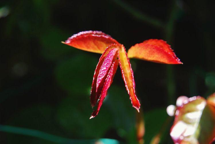 Leaf Beauty In