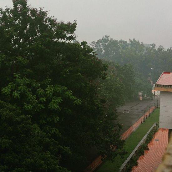 Rain ☔ Monsoon Cool Niceweather Enjoy Juno Filter Nature XPERIA Xperiaz Photooftheday Photographyislifee Relax Tea