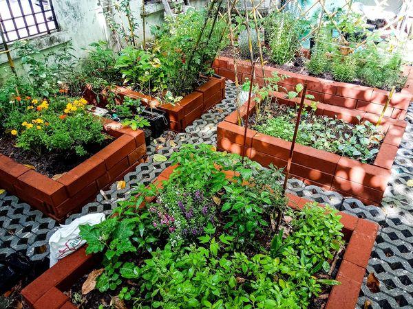 ผักสวนครัวจัดเต็ม แบบปลอดสารพิษ Organic Organic Farm Organic Garden สวน High Angle View Plant