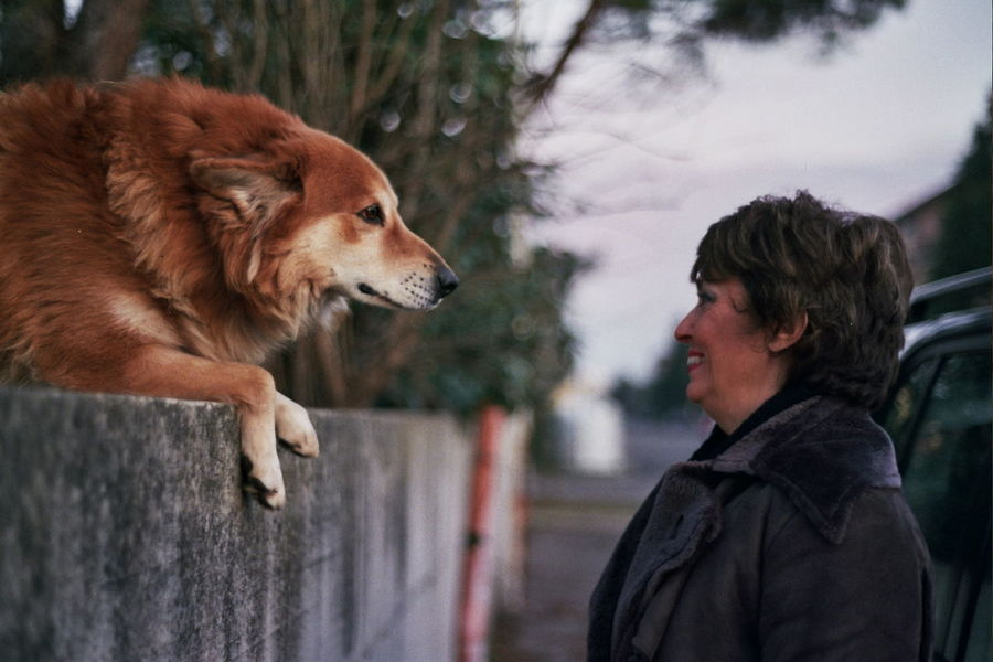 Dog Focus Hello Look Meeting New Friends Pets Women Who Inspire You