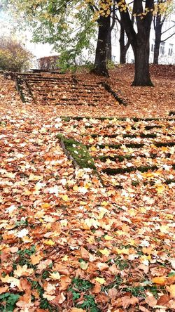 Carpet Of Leaves Srairs Old Stairs Abandoned Stairs Leaves On Stairs Mossy Stairs Stairs Up Park Park Stairs Tree Leaf Fall Change Autumn Autumn Collection Fallen Dried Fallen Leaf