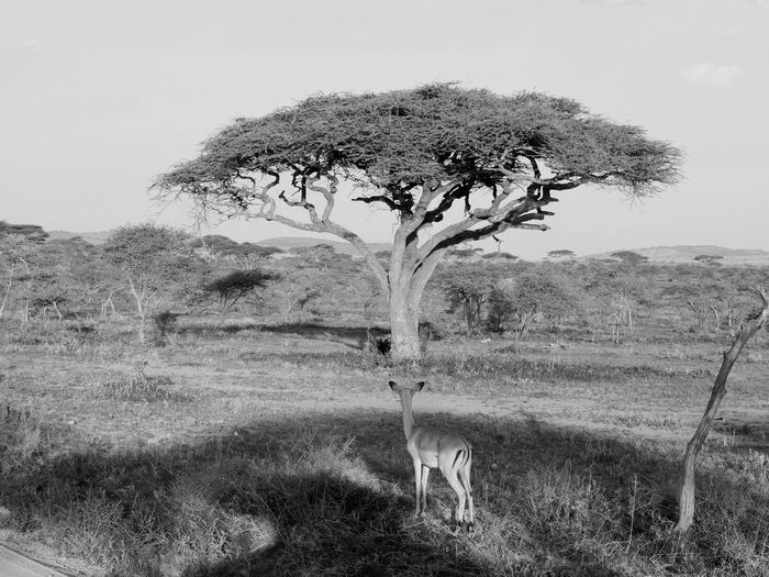 Safari Tanzania Africa Eye Em Travel Eye Em Around The World Day No People Beauty In Nature Landscape Tranquility Scenics - Nature Outdoors Tranquil Scene