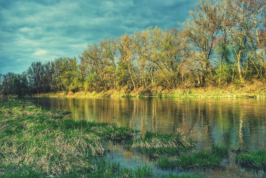 Landscape Riverscape Landscapes With WhiteWall Rivershore River Plants Pebbles Water Reflections Grass Dry Grass Poplar Poplar Tree