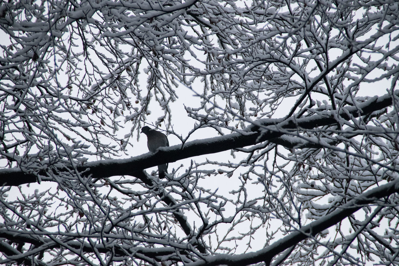 branch, tree, bare tree, low angle view, nature, day, animals in the wild, animal themes, beauty in nature, no people, outdoors, one animal, bird, perching, close-up, sky