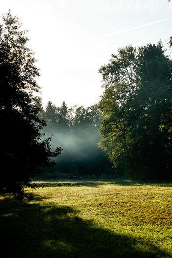 morning walk 🌳🌲 Fog Bad Saarow Brandenburg Germany Deutschland Wald Waldspaziergang Morgen Moody Hain Tree Sky Grass EyeEmNewHere