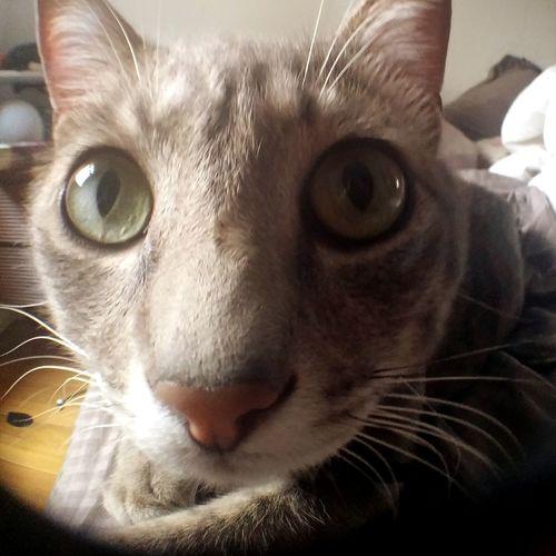 Aryovaldo curioso com a lente Cute Cat Pets