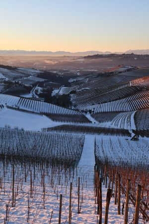 Snowed Hills Snowed Landscape Snowscape Winter Winterscapes Langhe Hills And Valleys Tranquility Travel Destinations Hills Vineyards In Winter Winter Sunset Travel Outdoors Frozen Landscape  Sunset Agriculture Outdoors Sky Cold Temperature Winter Scenics Nature No People Beauty In Nature Snow Landscape Day