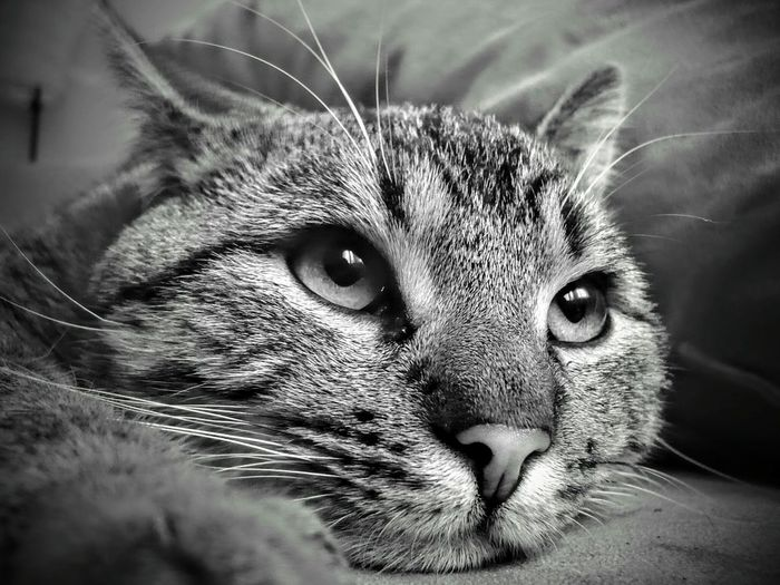 Lione Leica Lens Leicacamera Leica Lover Blackandwhite Black And White Pets Leicaphotography Monochrome Photography Cats Cute Animal Cat Lovers Pet Portraits Kitten Young Animal