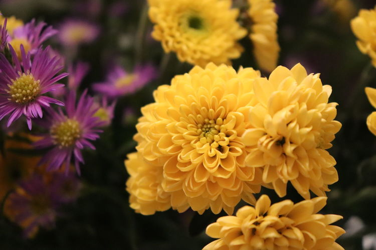 Close-up of yellow flowering plants in park
