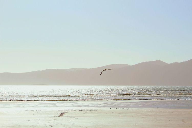 Bird flying on beach against clear sky