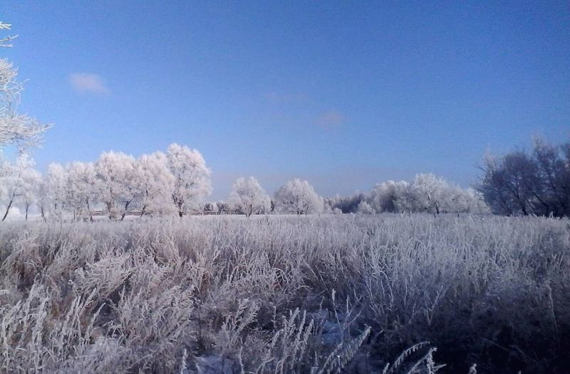 White Sky Sky And Trees Blue Sky Blue Winter Wintertime Winter Trees Winter Sky Winter Time Tree Flower Rural Scene Winter Snow Cold Temperature Branch Agriculture Springtime Field Cold Snow Covered