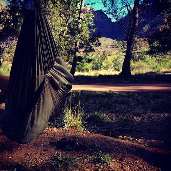 People And Places camping in zion national park Tree Surface Level Day Outdoors Sunny Tranquil Scene Tranquility Splashing Remote The Way Forward Long WoodLand Scenics Non Urban Scene Non-urban Scene Solitude No People Countryside
