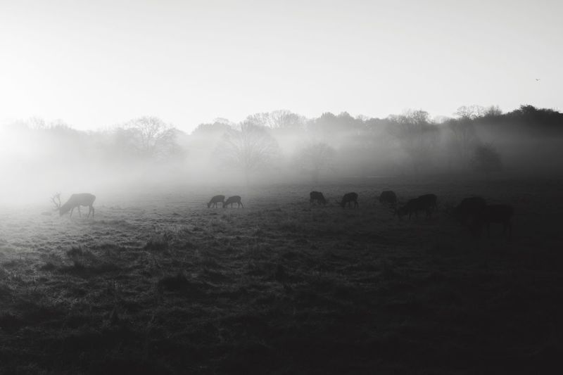 Miles Away || it's been a while since I've posted. How's everyone doing? I'm working some really exciting projects this year, which I'll be telling you more about soon... 🙏🏽 Landscape Beauty In Nature Nature Animal Themes Travel Destinations EyeEm Best Shots Landscape_Collection Blackandwhite The Great Outdoors - 2017 EyeEm Awards