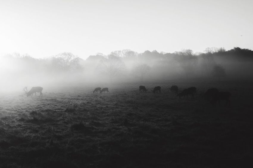 Miles Away    it's been a while since I've posted. How's everyone doing? I'm working some really exciting projects this year, which I'll be telling you more about soon... 🙏🏽 Landscape Beauty In Nature Nature Animal Themes Travel Destinations EyeEm Best Shots Landscape_Collection Blackandwhite The Great Outdoors - 2017 EyeEm Awards