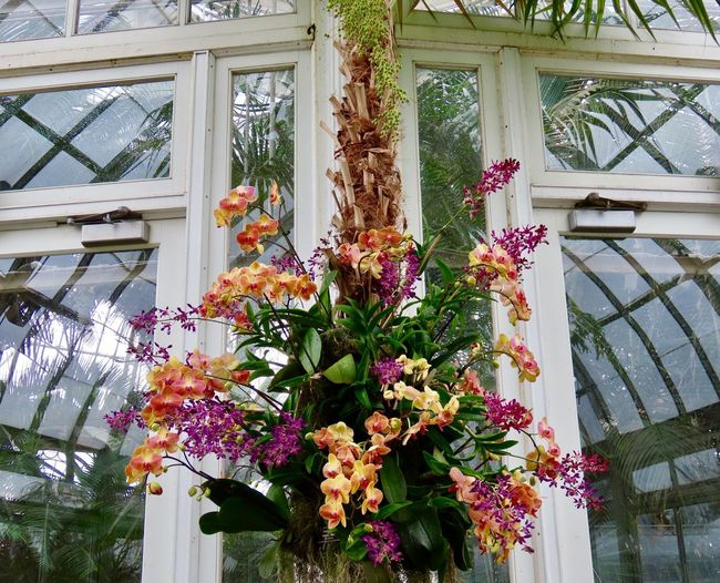 Multicolored orchids flowering plants glass entrance reflections EyeEm nature lover Built Structure Building Exterior Glass - Material Low Angle View