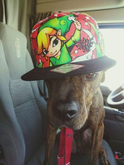 Dog has good style Cool Dog Hat Dog Zelda Fun With Animals